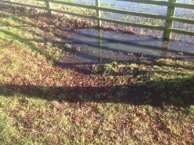Field ponds