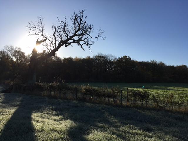 frosty morning_2017-11