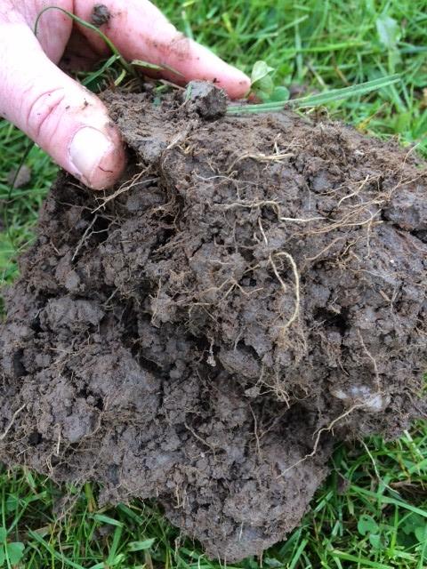 good soil rooting
